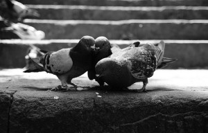 Pigeons need to eat too
